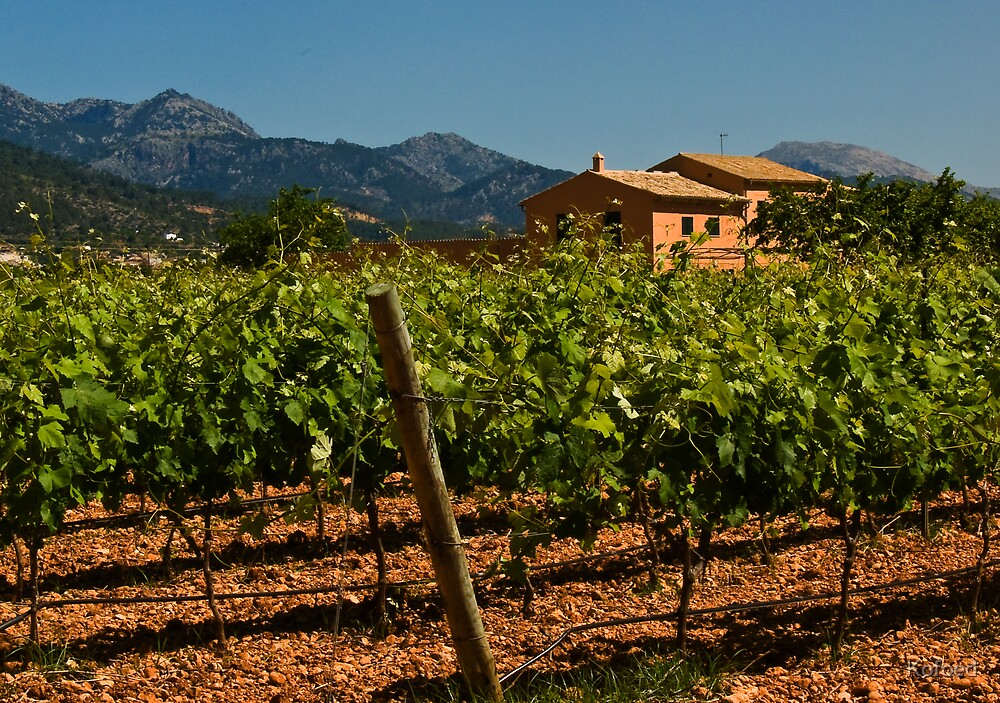 Wine from Mallorca by Kofoed