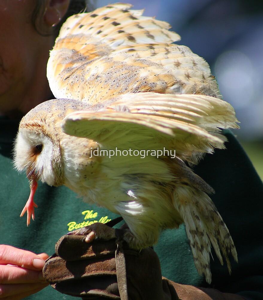 Barn Owl  by jdmphotography