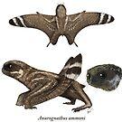 Anurognathus ammoni by SerpenIllus
