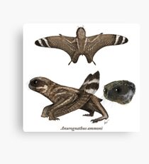 Anurognathus ammoni Canvas Print