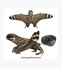 Anurognathus ammoni Photographic Print