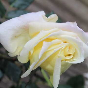 Yellow Rose Bud by RosevineCottage