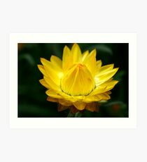 Delight In Yellow Art Print