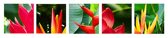 tropical collage by PeaceM