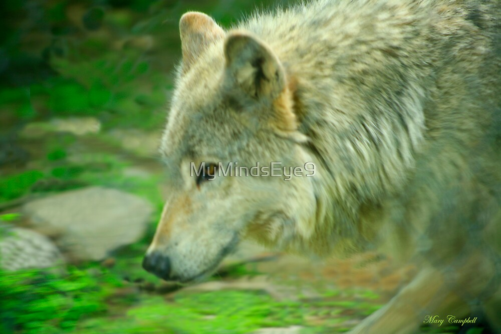 On the Prowl - Forest of Wolves Series by Mary Campbell