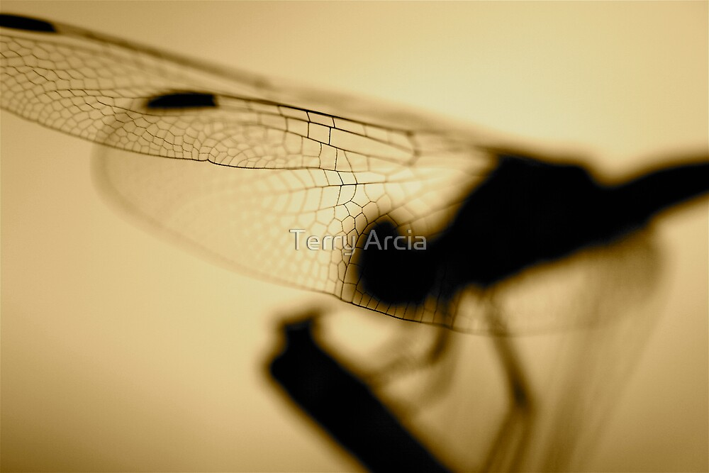 Shadows in Sepia  by Terry Arcia