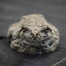 Greeter Frog by scenicvibephoto