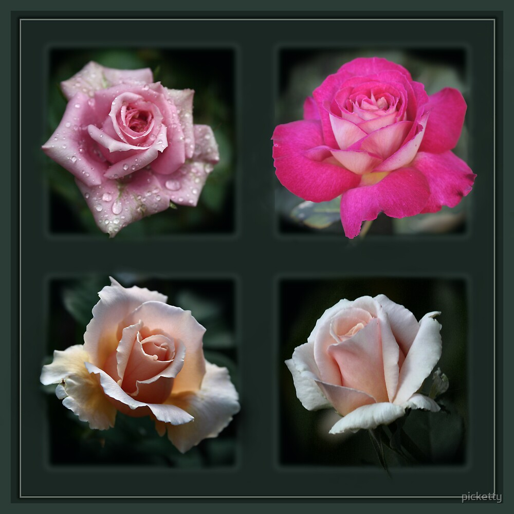 rose quad by picketty