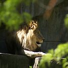 King of the Jungle by wolfllink