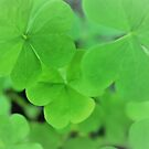 Green Clover by Stephen Thomas