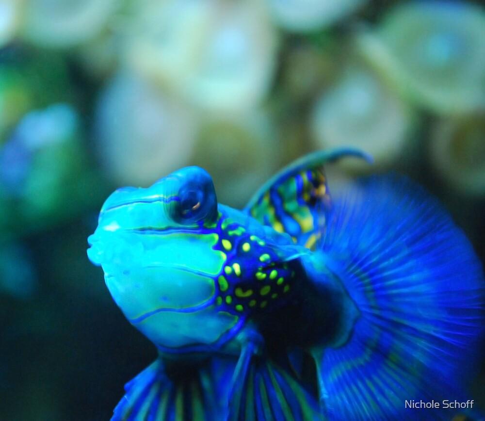 Blue Wonder by Nichole Schoff