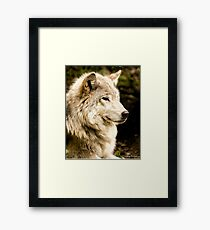At Rest - Forest of Wolves Series Framed Print