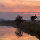Dawn over Pevensey Levels by Sue Robinson