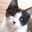 Innocent Homeless Kitten by Toni Kane