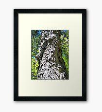 Shaggy Tree Framed Print