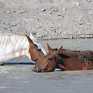 Five O'clock in Sand Wash Basin by WildHerdz