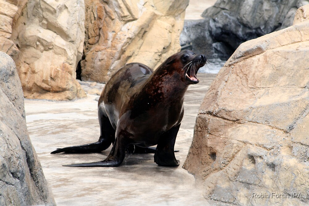 Happy Sea Lion by Robin Fortin IPA