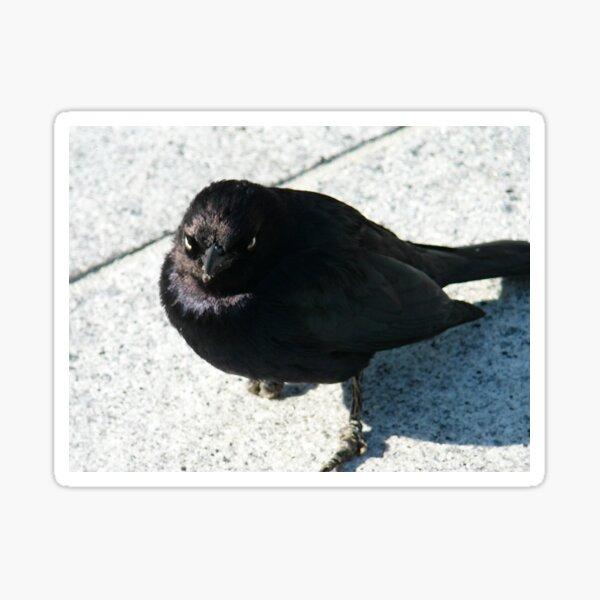 Funeral Genius Blackbird Sticker