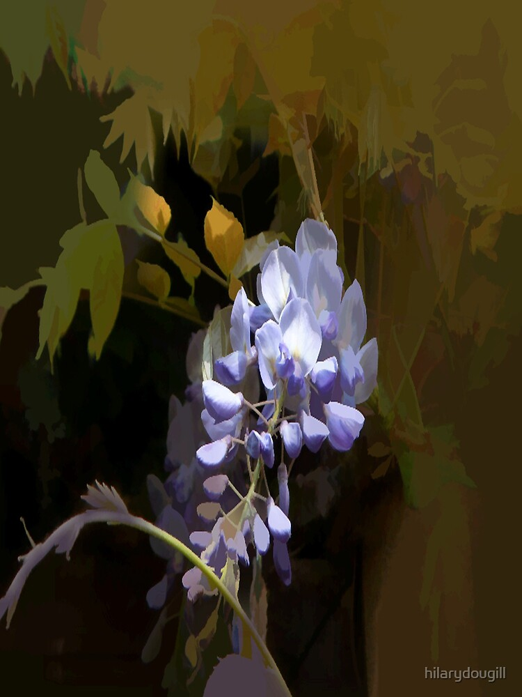 Abstract of Wisteria by hilarydougill