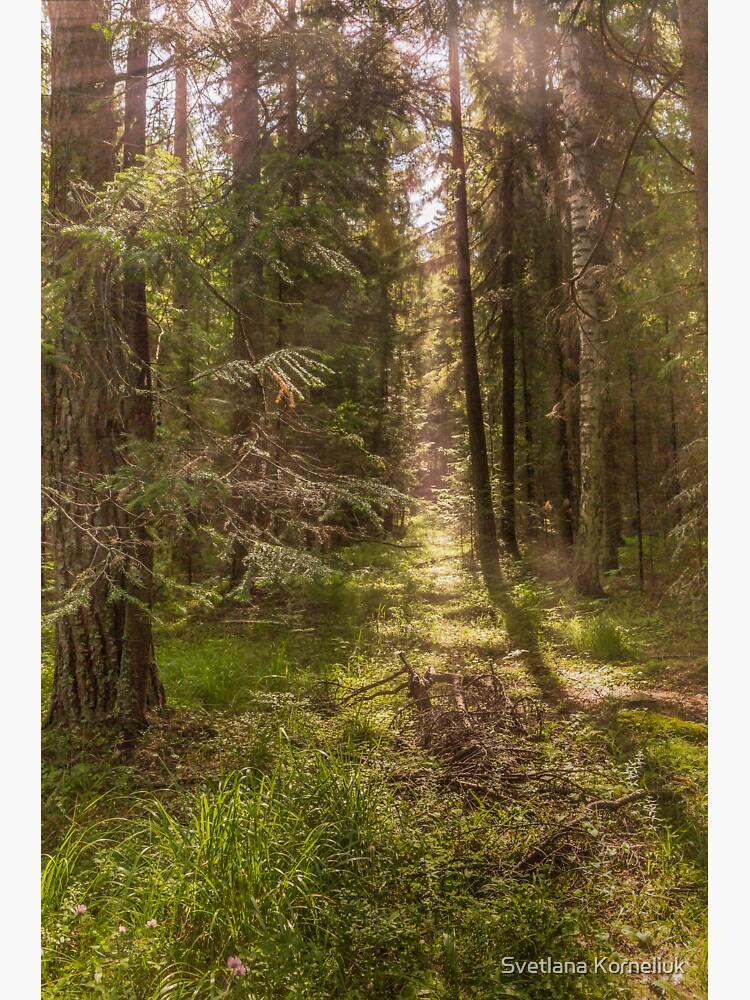 Summer forest by SvetlanaKorneli