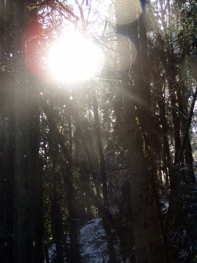 Forest Sun Rays in the Snow #50 by Dawna Morton