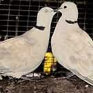 Collared Doves ~ I Loves You.... by Toni Kane