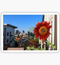 Nashville and the  Balcony Sunflower Sticker