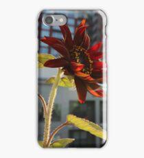 Nashville and the  Balcony Sunflower iPhone Case/Skin