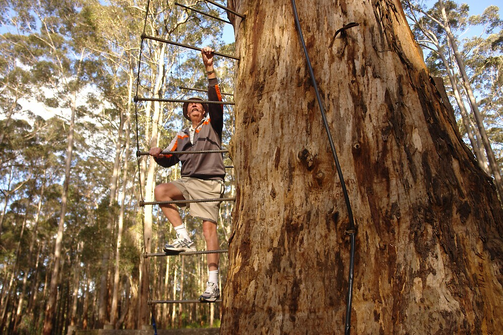 Tree climbing West Australian style 1020 views by georgieboy98
