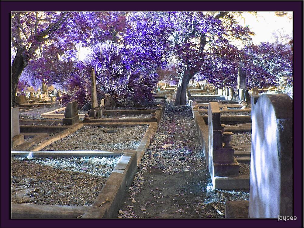 Violet Death by jaycee