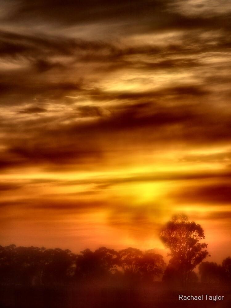 Golden Mist by Rachael Taylor