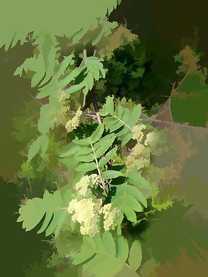 Abstract of Rowan Blossom (Mountain Ash) by hilarydougill