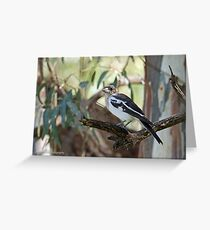Pied Butcherbird - Swan Hill, VIC (1545) Greeting Card