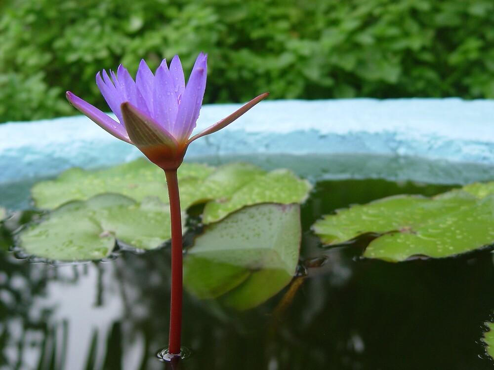 Flower Garden by traveler25