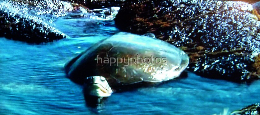 Turtle in Hawaii by happyphotos