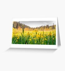 daffodils on beaver lake, stanley park  Greeting Card