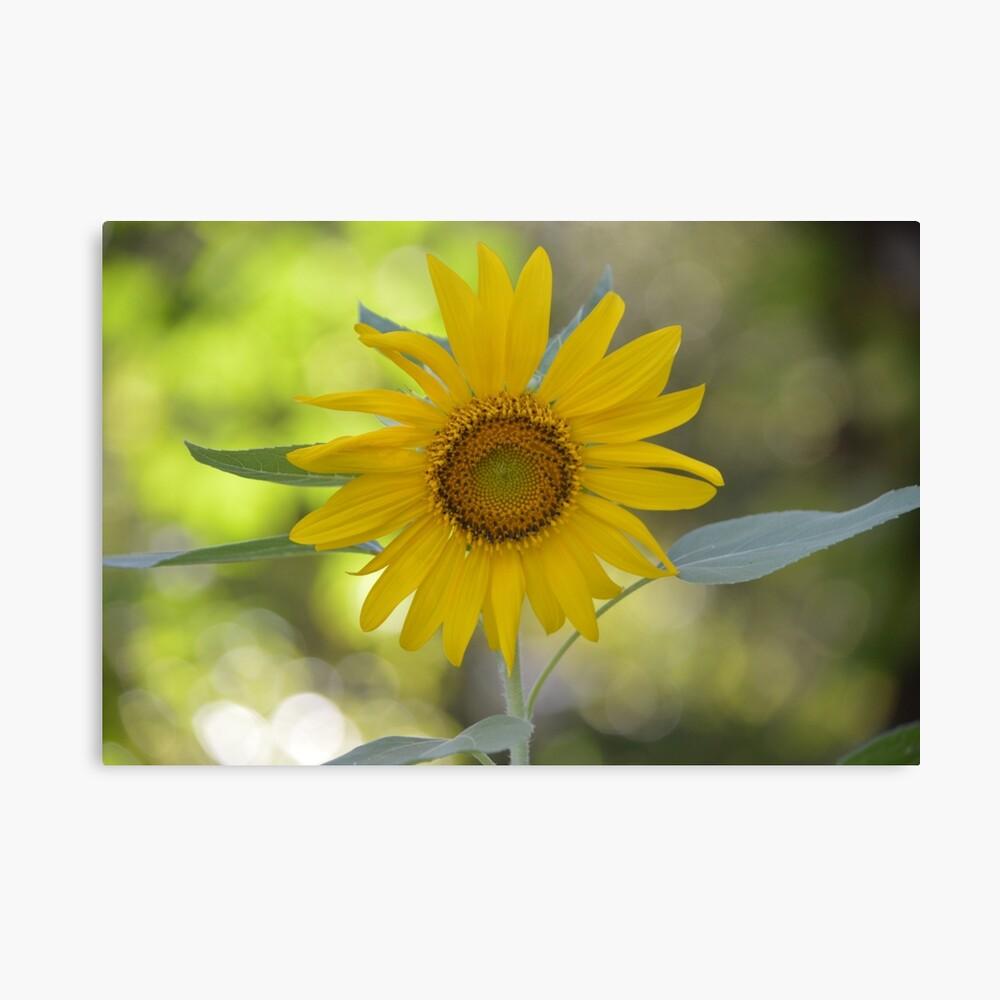 Sonnige Sonnenblume Leinwanddruck