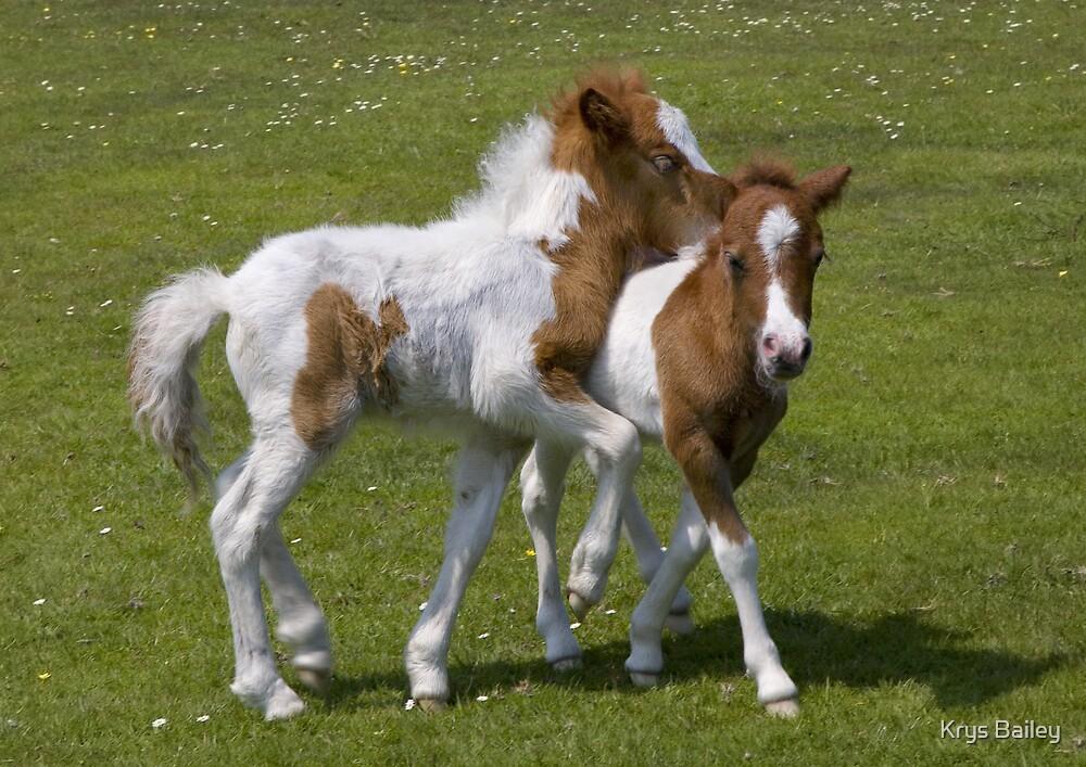 Horseplay (Shetland Ponies) by Krys Bailey