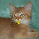Yellow Feather by sarahnewton
