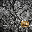 Watch For Snakes by Jola Martysz