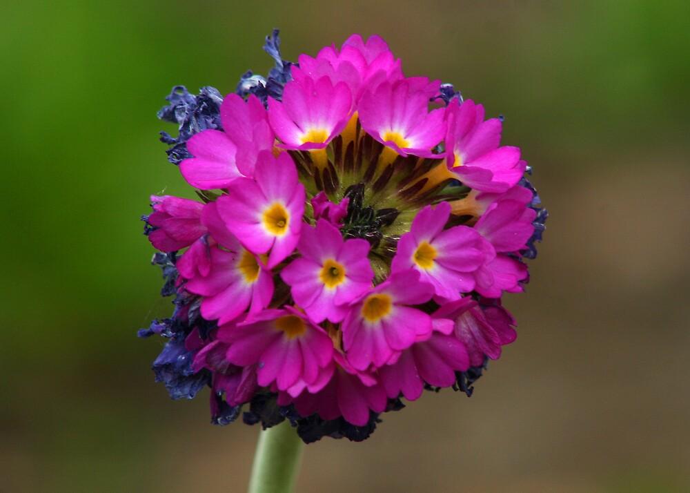 Small Bouquet by djnoel