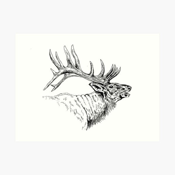 Elk Bugle Art Print