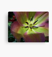 NATURE: .. LIGHT WITHIN Canvas Print