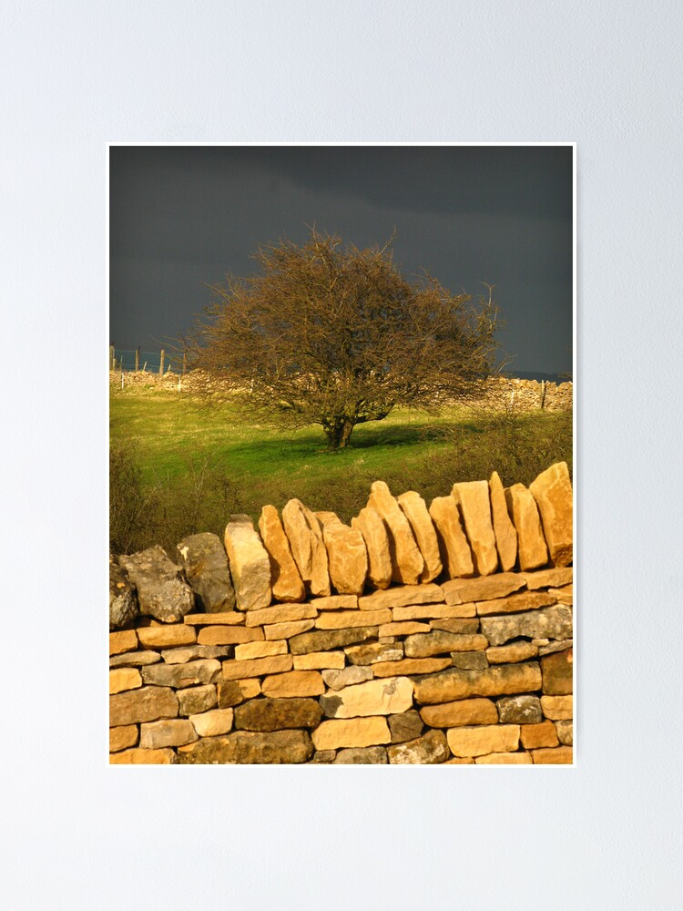 Alternate view of Cotswold Tree Poster