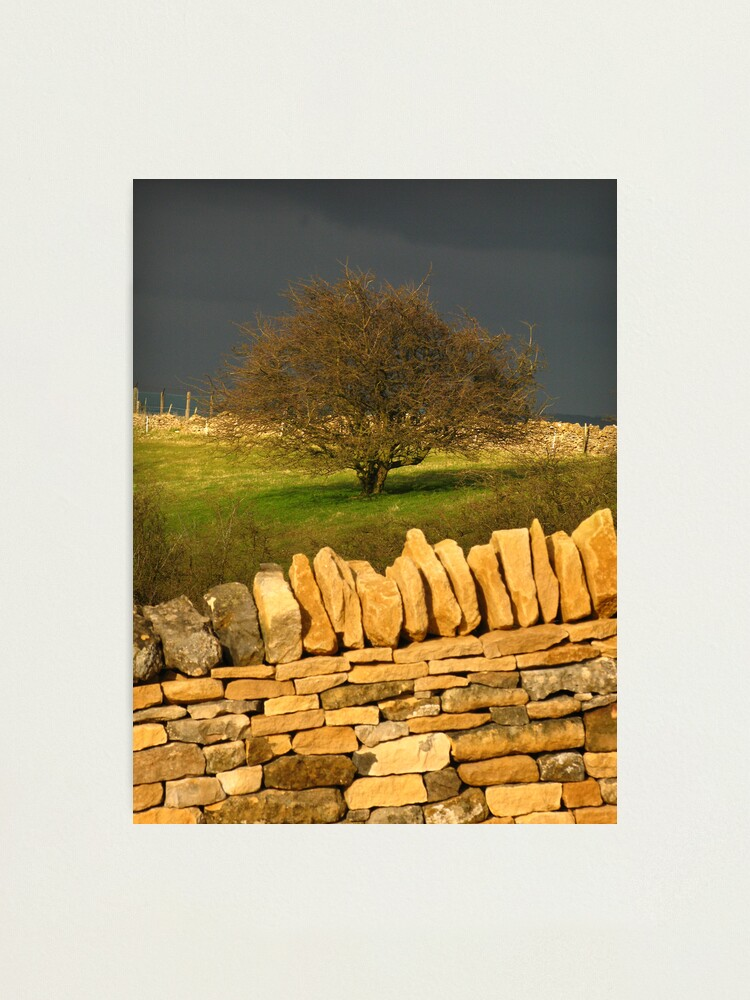 Alternate view of Cotswold Tree Photographic Print