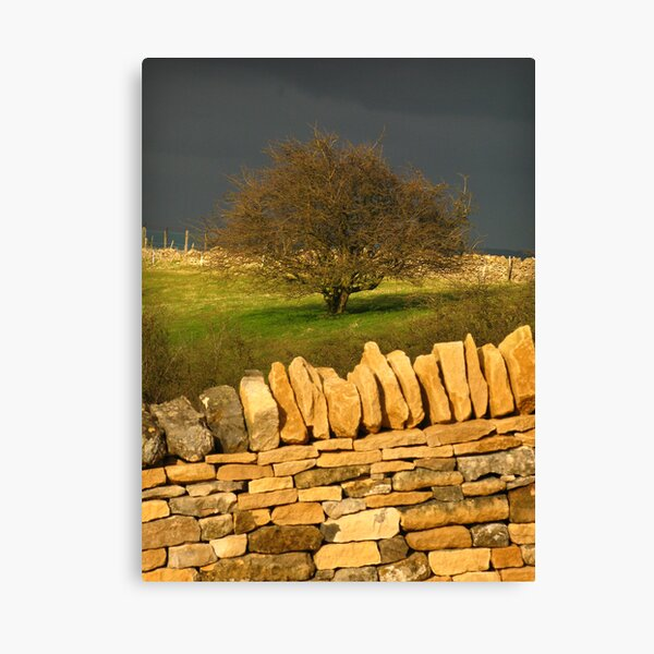 Cotswold Tree Canvas Print
