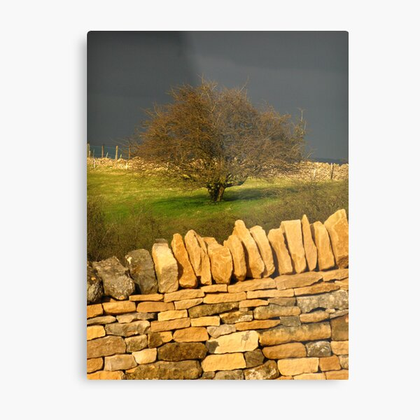 Cotswold Tree Metal Print