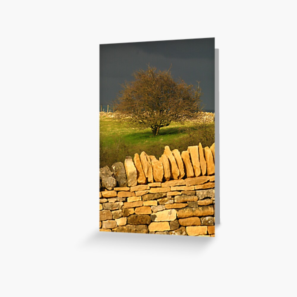 Cotswold Tree Greeting Card
