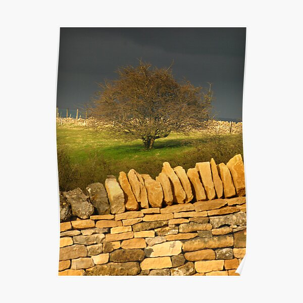 Cotswold Tree Poster