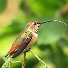 A Hummer's Tongue by eyes4nature